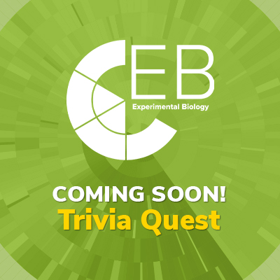 Coming Soon! Trivia Quest